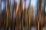 Trees [no. 1079]