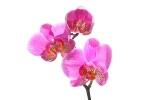 Orchidee  [no. 113]