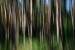 Trees [no. 298]
