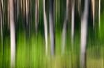 Trees  [no. 302]