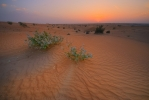 Desert near Dubai [no. 1650]