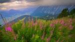 Berchtesgadener Alpen - Summer Evening [no. 1672]